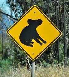 Watch Out for Koalas Road Sign - photo by Penny Smith