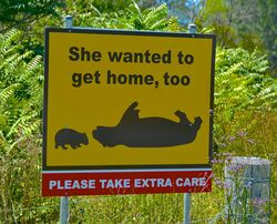 Watch out for Wombats - they want to get home safely too - Wollombi NSW - Photo by Penny Smith