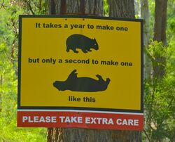 Watch out for wombats - it takes too long to make new ones. Photo by Penny Smith