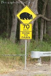 Watch for Wombats in the area from Dusk to Dawn - Victoria