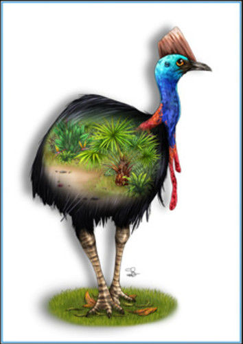 Cassowary Greeting Card - The Land Down Under