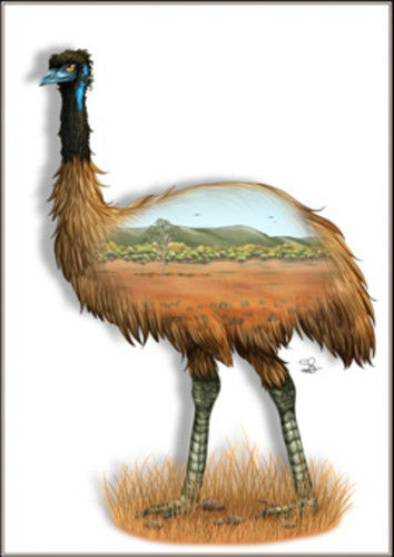 Emu Greeting Card - The Land Down Under