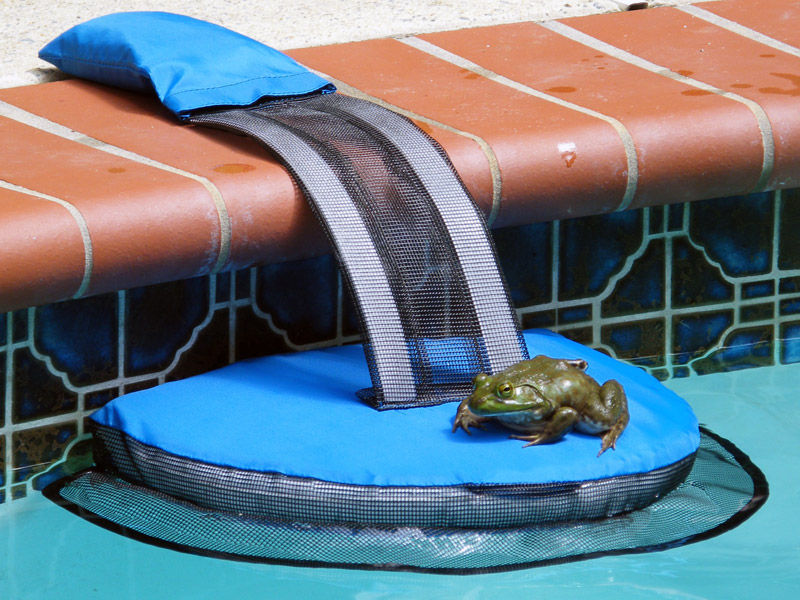 Frog using FrogLog to escape a pool