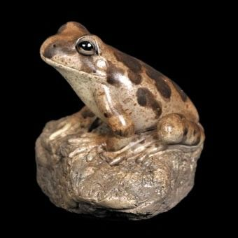 Ornate Burrowing Frog Figurine - The Land Down Under