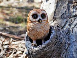Adorable baby barn owl - garden statue