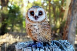 Realistic Barn Owl Garden Statue - The Land Down Under