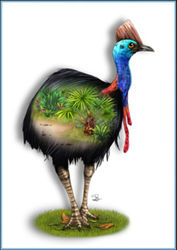 Greeting Card - Cassowary