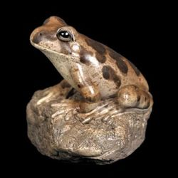Ornate Burrowing Frog Figurine