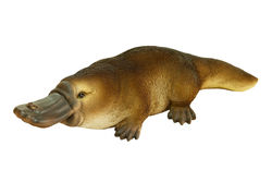 Platypus Indoor/Outdoor Garden Statue