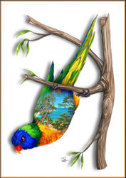 Greeting Card - Rainbow Lorikeet